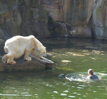 polarswim